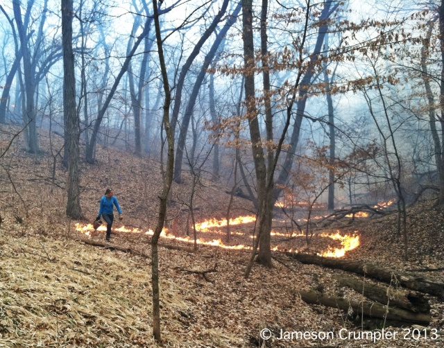 Sarah Bailey finishing up the last of the interior of the fire at Indian Cave.  This was a highly physical burn for all involved, as the topography was steep in almost all areas and heavy equipment access was limited to the perimeter of the burn unit.