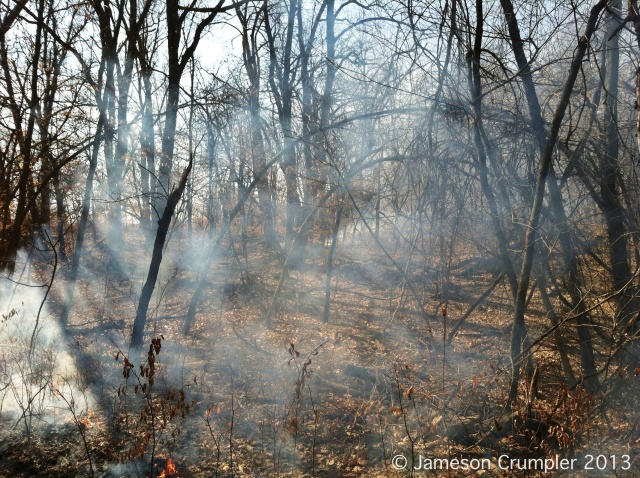 As fires are suppressed, woody plant density increases and herbaceous plant density decreases.  Some indicator species of degraded or fire-starved eastern woodlands and forests are Elm (Ulmus spp.), Maple (Acer spp.), Hackberry (Celtis spp.), and Sassafras (Sassafras albidum) as well as the lack of an herbaceous understory.