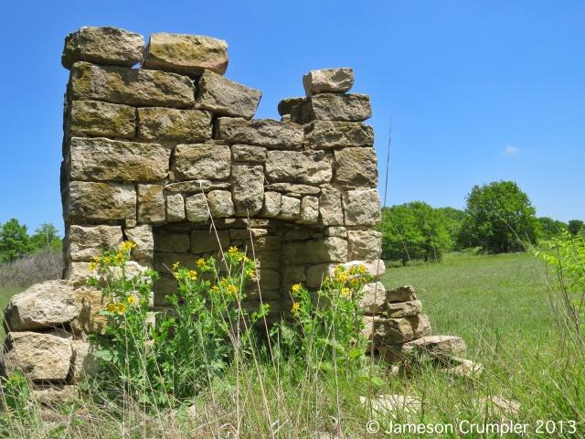 Engelmann's Daisy (Engelmannia peristenia) reclaims its former homeland within an old pioneer homestead.