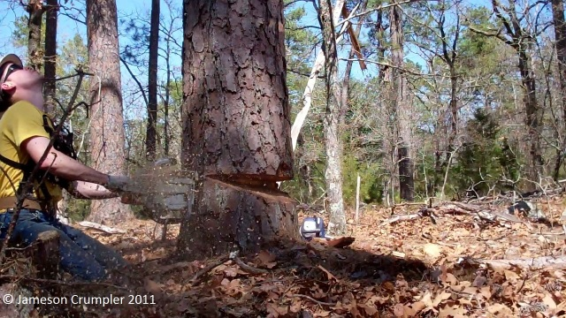 Timber falling for a logging operation in a Shortleaf Pine (Pinus echinata)-Hickory (Carya spp.) forest in southeastern Oklahoma.