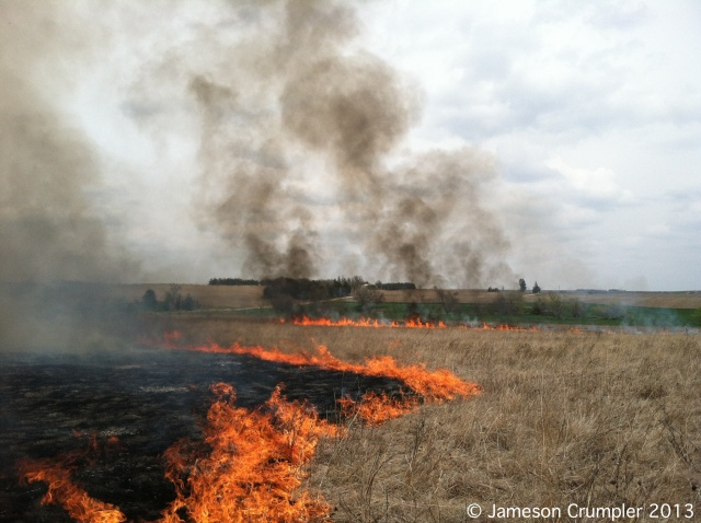 The flank fires and backfire making steady progress on the northern half of Pokorny Prairie.