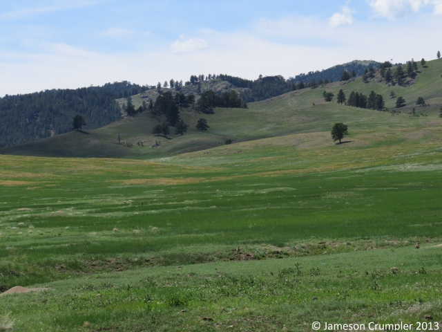 The montane grasslands of the Black Hills are scattered, and, like almost any grassland in North America, is subject to invasion of woody plant species - Ponderosa in this case - in the absence of fire.