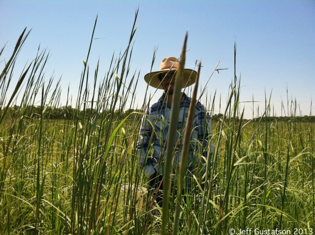 I met Big Bluestem (Andropogon gerardii) - one of the classic tallgrass prairie grasses.